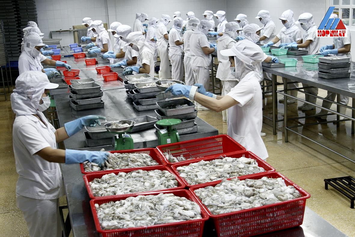 hệ thống xử lý nước thải công ty thủy sản Mai Linh Cà Mau