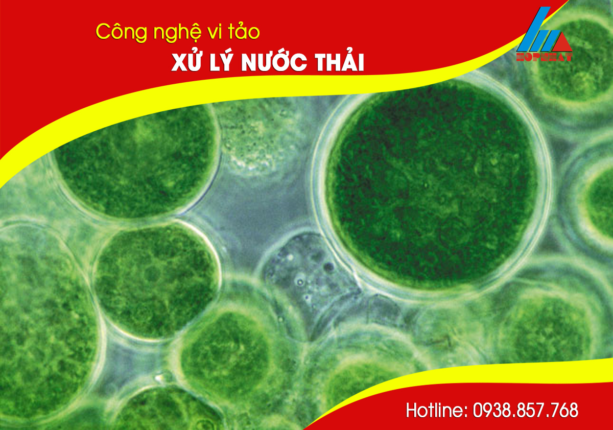 Công nghệ vi tảo trong xử lý nước thải