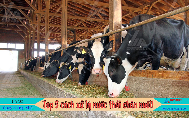 Top 3 cách xử lý nước thải chăn nuôi tốt nhất